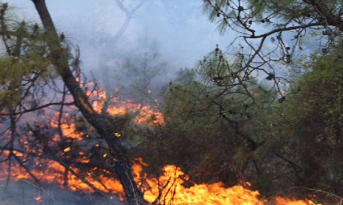 EU assists Sweden in fighting forest fires