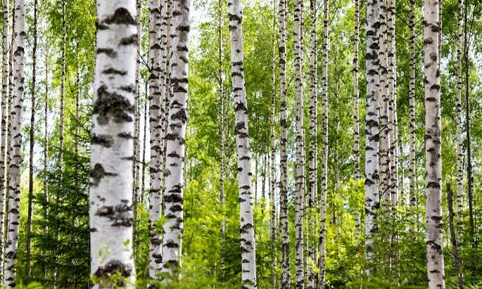 Public opinions on forest usage drift apart in Finland
